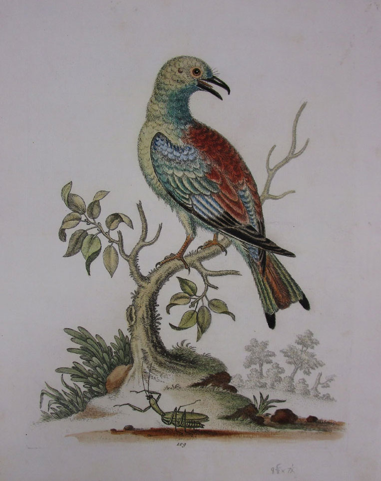 Hand Colored Nature Print.jpg